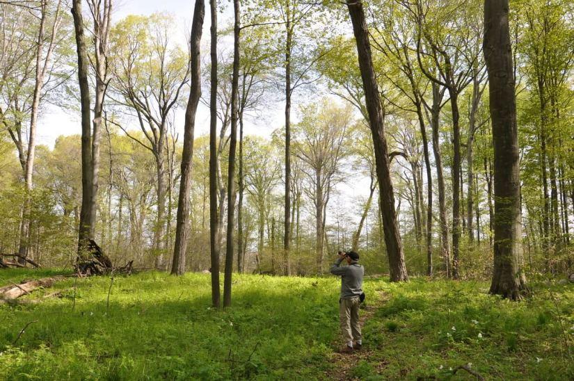 jackson-gunn old growth forest, long point, ontario