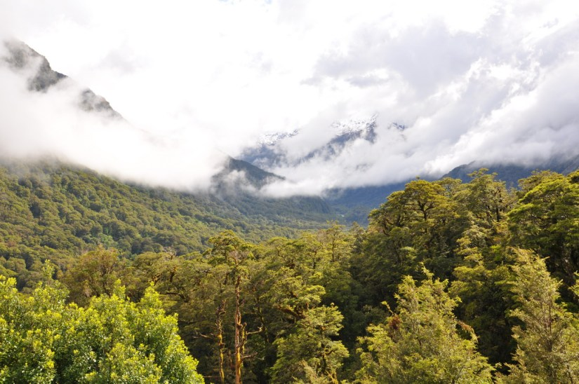 view at kaka creek, fiordland national park, south island, new zealand