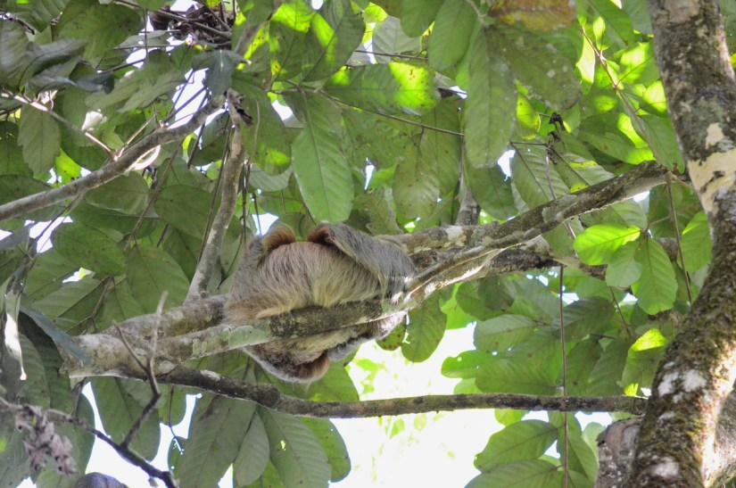 a sloth, ecocentro danaus, la fortuna, costa rica