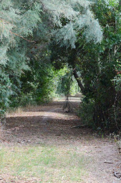 a tree tunnel, oasi di ca' mello, oasis of ca' mello, parco regionale veneto del delta del po, po river delta, italy