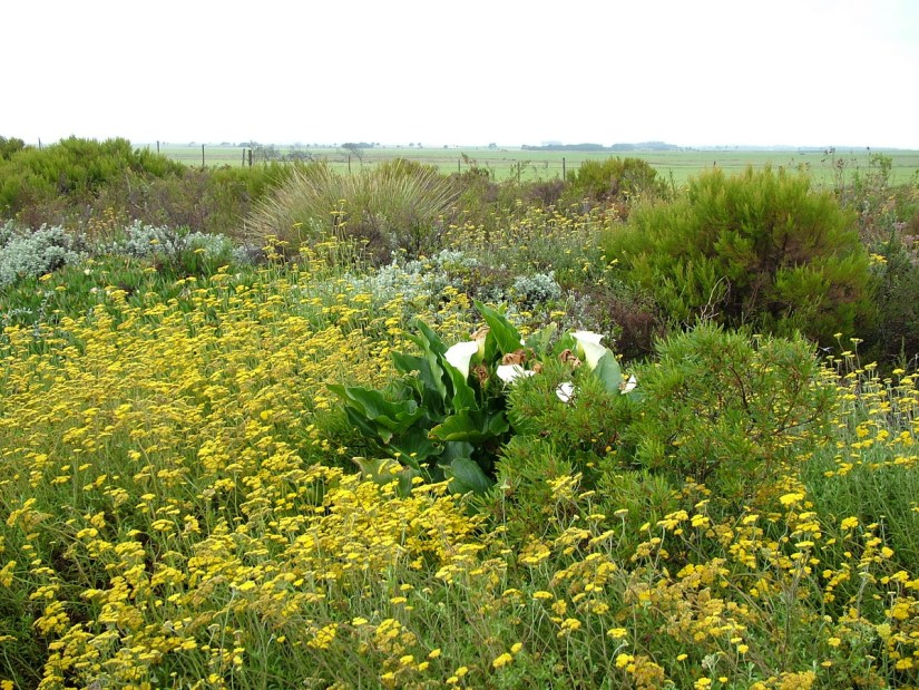 fynbos, garden route, south africa