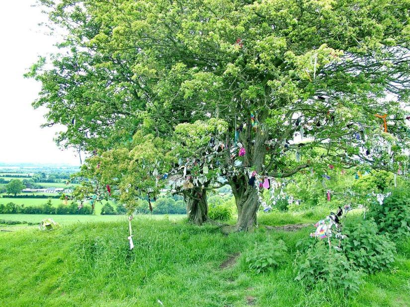 wishing tree, rag tree, fairy tree, the hill of tara, county meath, ireland