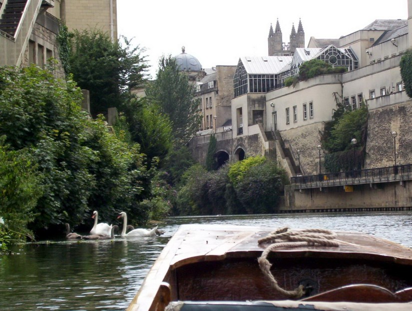 punting beside mute swans, avon river, bath, england