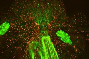 Fly monster © Orestis Faklaris & Michael Lang – Institute Jacques Monod, CNRS UMR7592 - ImagoSeine
