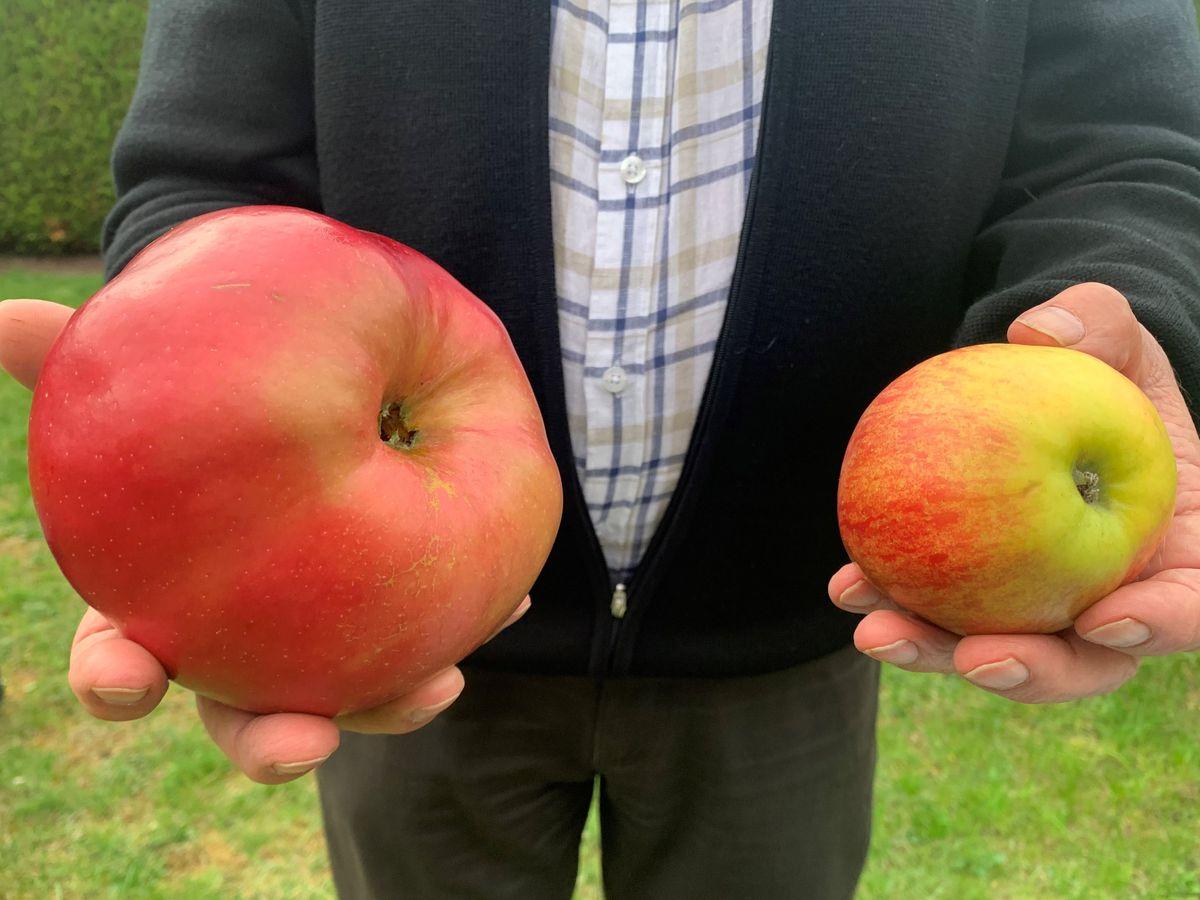 insolite la plus grosse pomme du monde