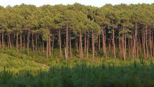 「landes de gascogne」的圖片搜尋結果