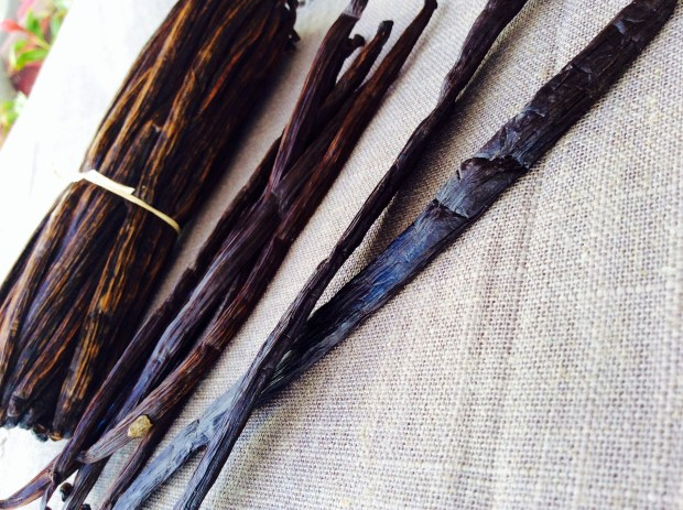 vanilla pods for organic cosmetic fragrance