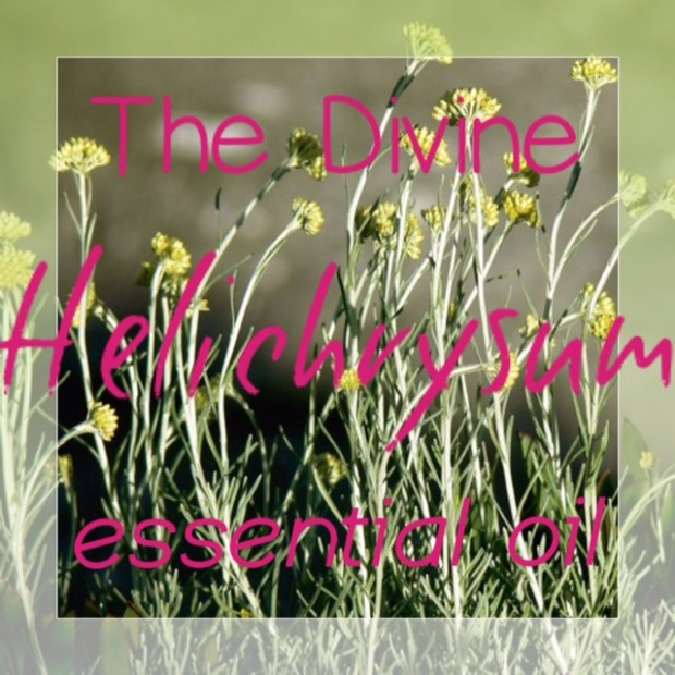 the divine helichrysum Essential oil