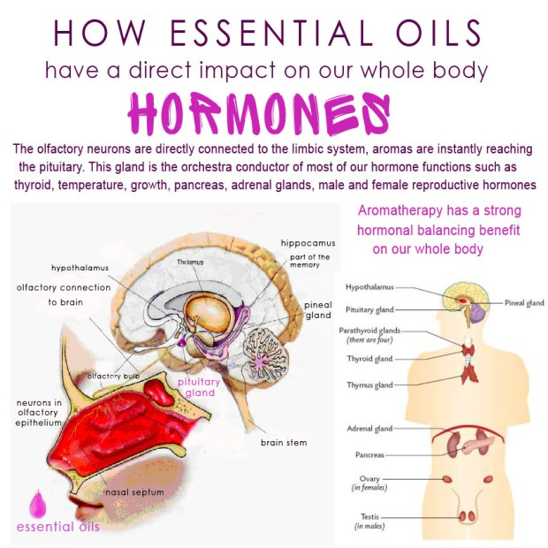 How Essential Oils Have a Direct Impact On Our Whole Body