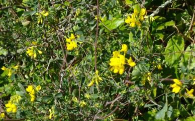yellow weeds