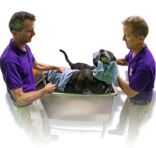 Dog Grooming Franchise