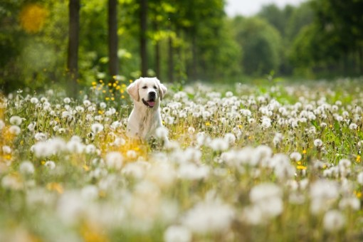 A Better Boost – Pet Supplements and More