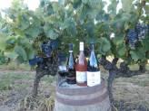 Visita de un viñedo y degustación de vinos