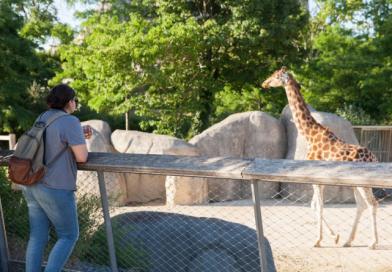 Un bebé jirafa, la nueva atracción del Parque Zoológico de París