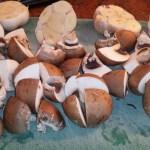 Kastanje champignons en knoflook