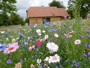 Artful flower meadow