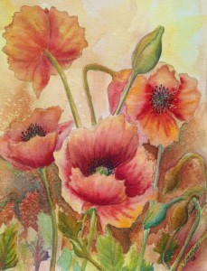 Spring Poppies a Watercolor