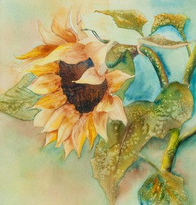 Sunflower in Progress