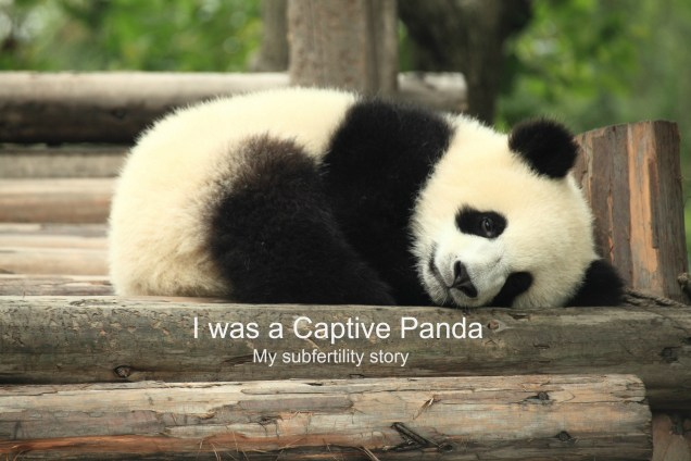 """""""Panda"""" by George Lu (2011) via Flickr, CC BY 2.0. Text added by author."""