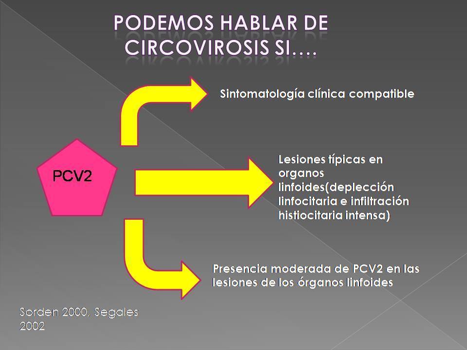 Circovirosis porcina: Sintomatología, lesiones y diagnóstico  (3/3)