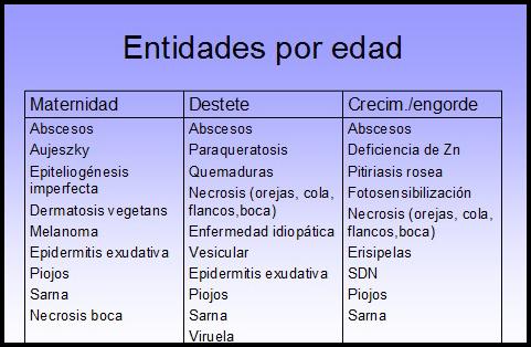 Epidermitis exudativa porcina II : Sintomas,lesiones,diagnóstico y tratamiento (1/5)