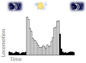 dibujo20081217moscaactividadlocomotriz