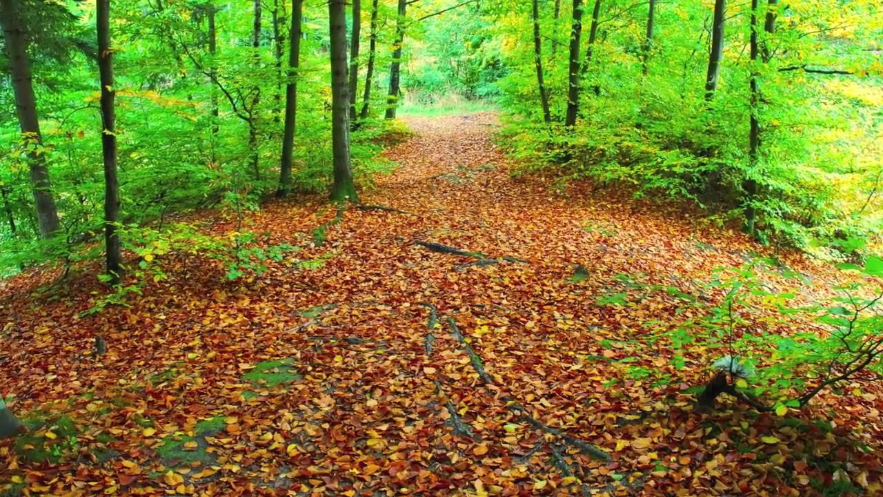 Październik: dwa nowe cykle