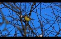 Franciszkańskim okiem 5 – Zima w ogrodzie