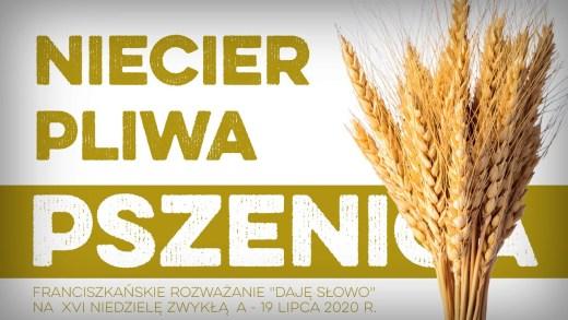 Niecierpliwa pszenica: Daję Słowo – XVI niedziela A – 19 VII 2020