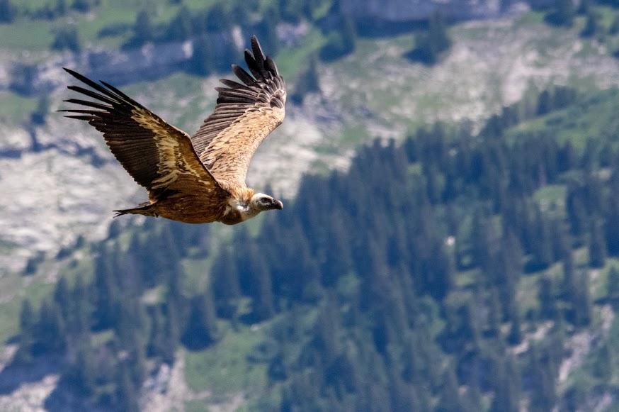 Wildlife photography avec le Pentax K3 et le Sigma 150-500mm K Mount