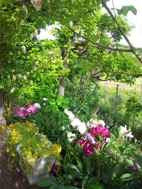 Questo giardino - 13