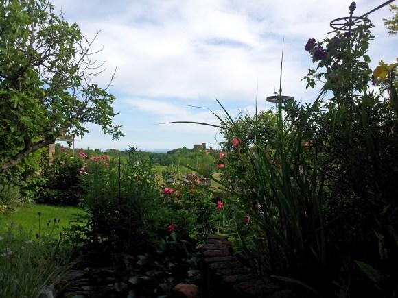Questo giardino - 20