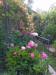 Questo giardino - 9
