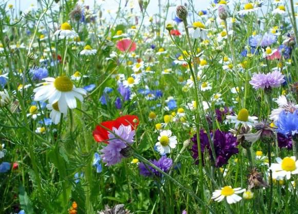 les-prairies-fleuries