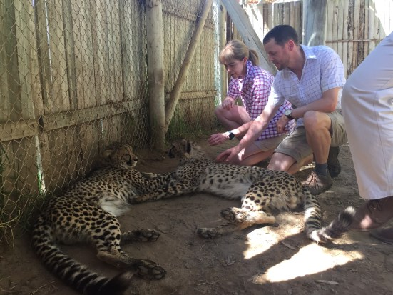 Cheetah petting!