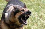 Feroz Perro Ataca a Tres Menores en la Colonia Linares