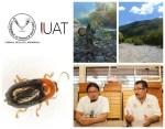 Descubren nueva especie de escarabajo en Tamaulipas