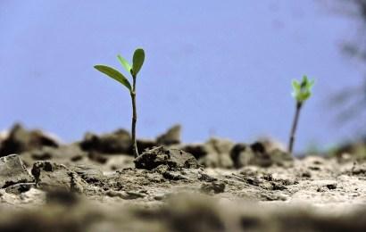 Gobierno de Tamaulipas impulsa recuperación de manglar