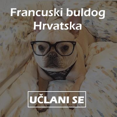facebook grupa francuski buldog hrvatska