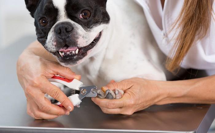 kako rezati nokte psu