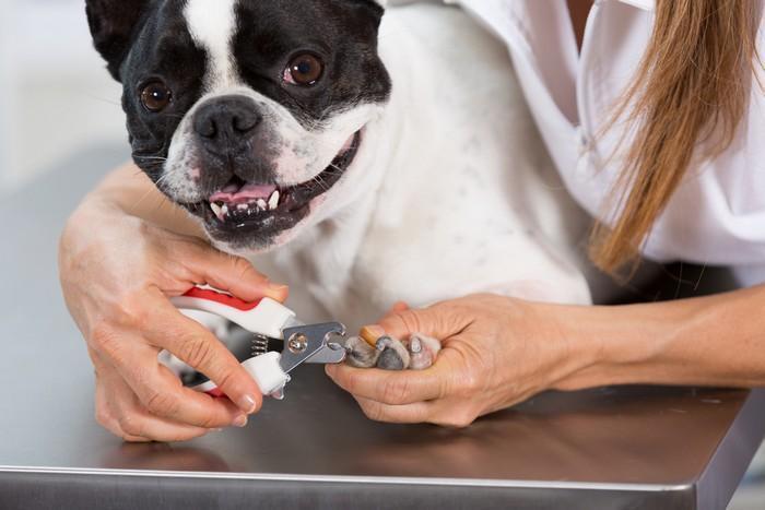 Kako i kada rezati nokte psu?