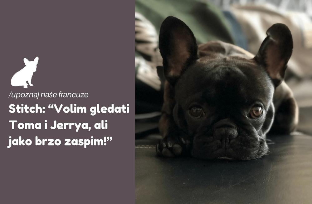 """Upoznaj Stitcha iz Zagreba: """"Volim gledati Toma i Jerrya, ali jako brzo zaspim!"""""""