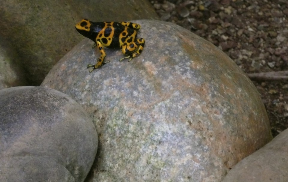 And Jane spotted this dart frog.