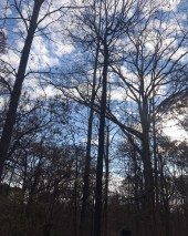 Trees by Liz
