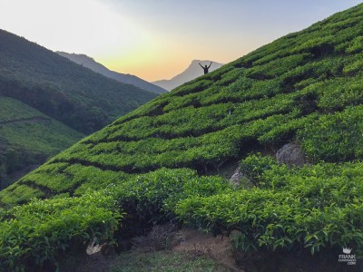 Anamecer en los campos de te en Munnar India