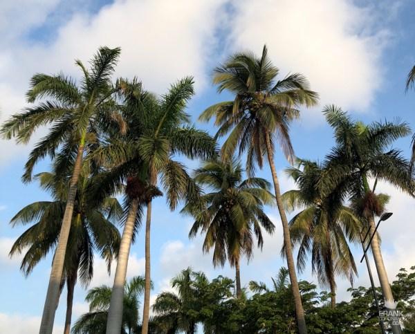 palmeras de veracruz