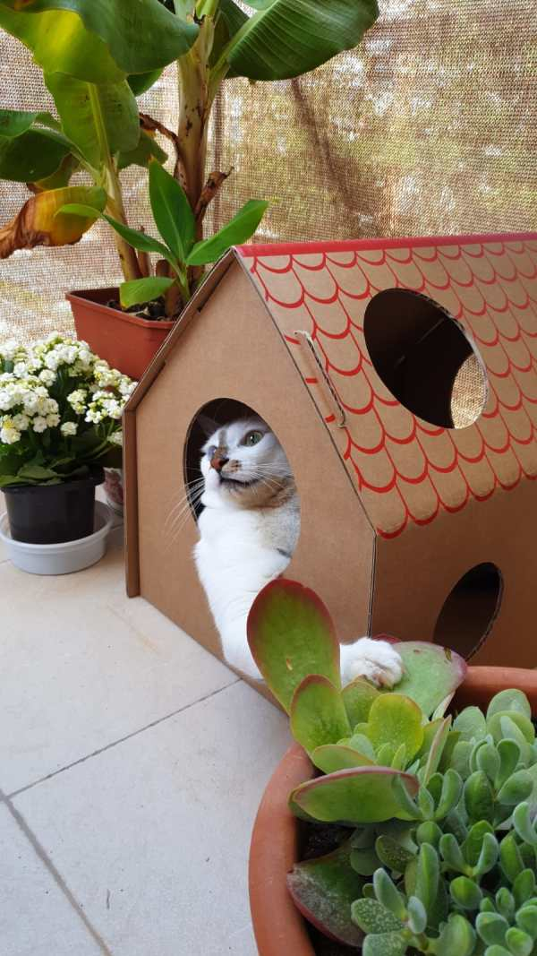 Bowie en Frankie's Cat House