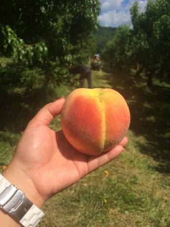 Peach Peach