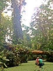 Canoe Ride at the Sloth Sanc