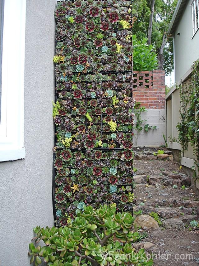 Franki Kohler, Succulent wall,-side